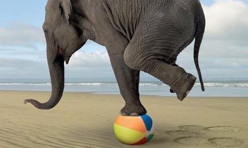 hp_elephant